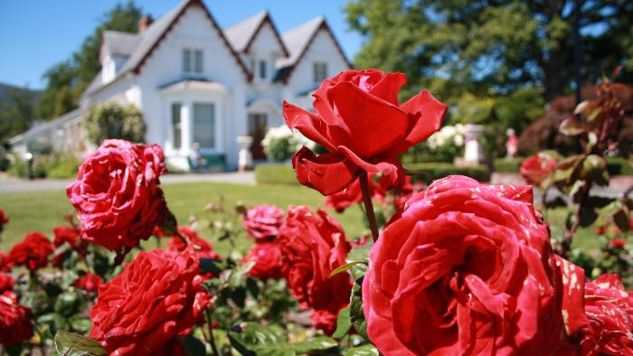 025Broadgreen Rose day 09 Broadgreen Historic House