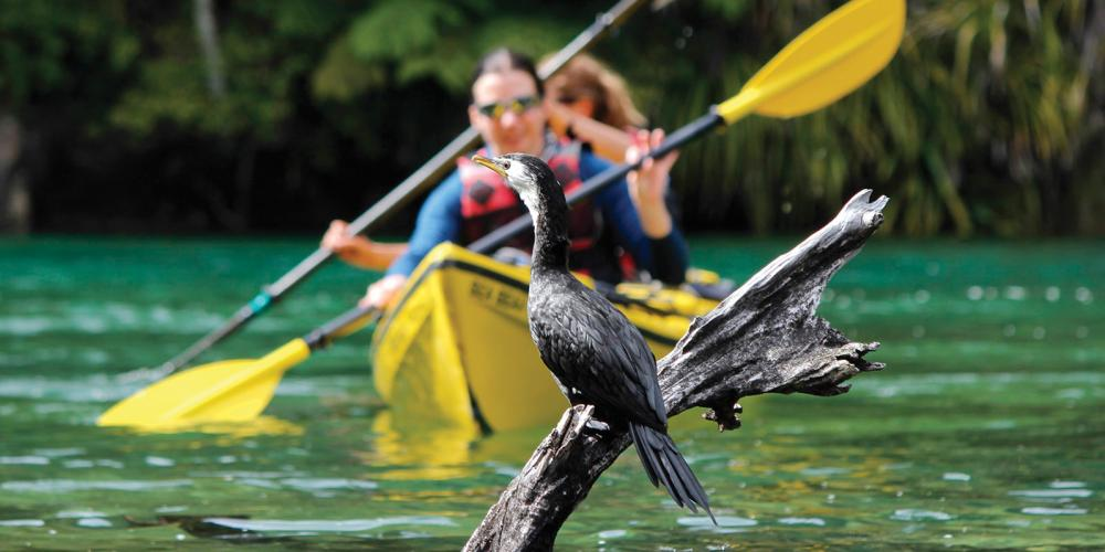 ATK Freedom Experiencing wildlife Low Res Abel Tasman Kayaks - Kayak Rental