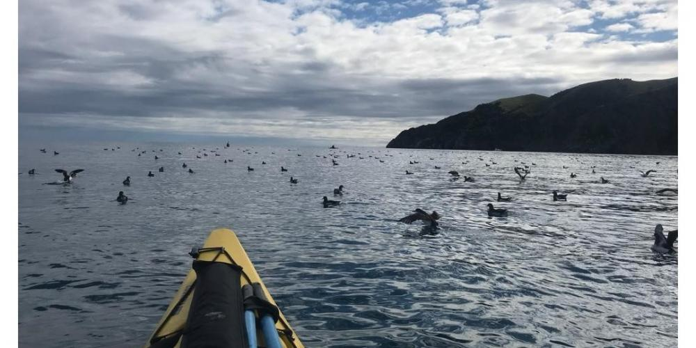 Cable Bay Kayaks Migrating Birds Cable Bay Kayaks - Experience untapped New Zealand