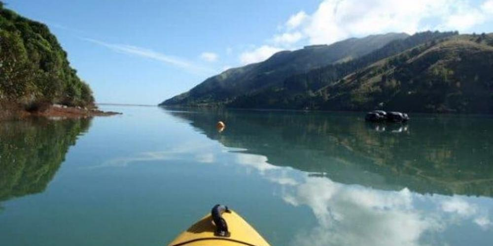 kayak paddleb in bay 980 Cable Bay Nest