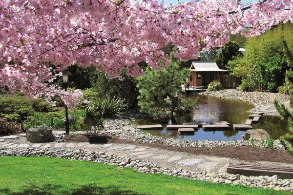 Cherry Blossom Festival - 22nd September
