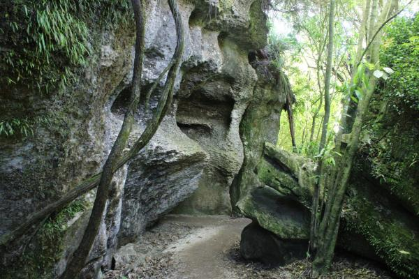 The Grove Scenic Reserve